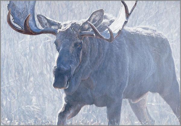John Banovich - Bull of the Woods