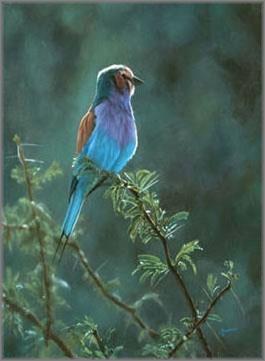 John Banovich - Lilac-Breasted Roller