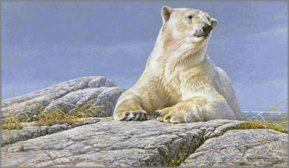Robert Bateman - Summertime - Polar Bear