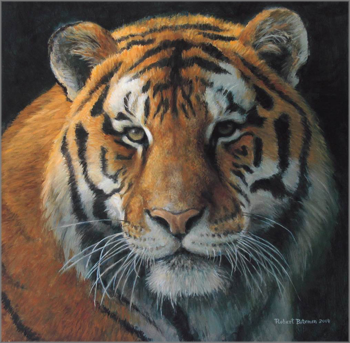Tiger by Robert Bateman