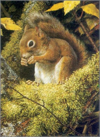 Carl Brenders - Acrobat's Meal - Red Squirrel