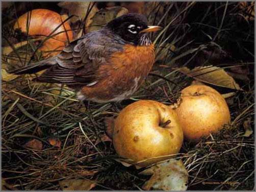 Carl Brenders - Apple Lover