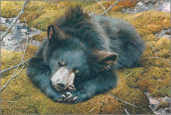 Carl Brenders - Bearly Asleep