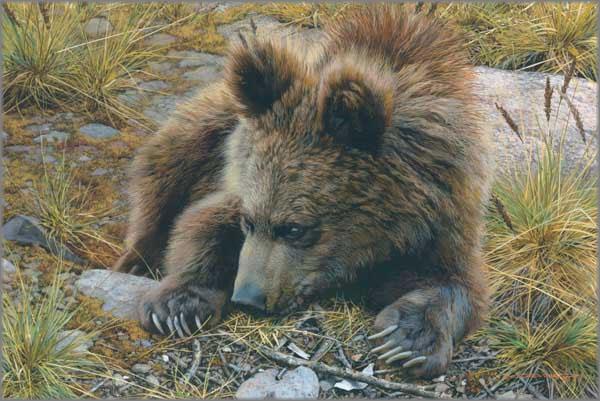 Carl Brenders - Bearly Awake