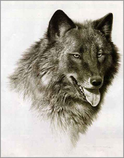 Carl Brenders - Black Wolf Portrait
