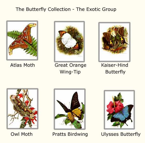 Carl Brenders - Butterflies - Exotic Group #1