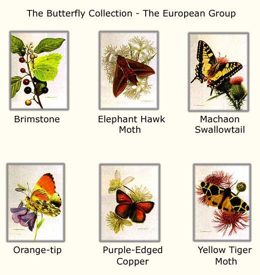Carl Brenders - Butterflies - European Group #2