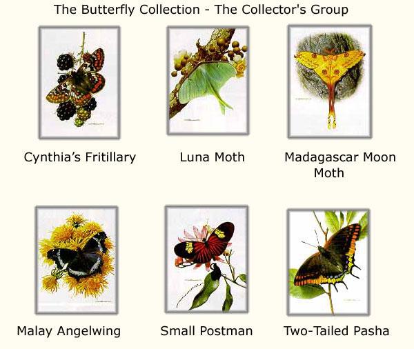 Carl Brenders - Butterflies - Collectors Group #3
