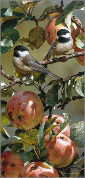 Carl Brenders - Chickadees and Apple Tree