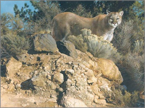 Carl Brenders - Cliff Dweller - Cougar