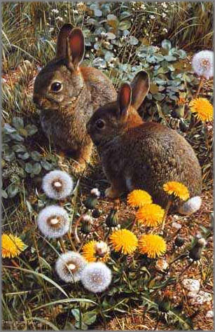 Carl Brenders - Colorful Playground - Cottontails