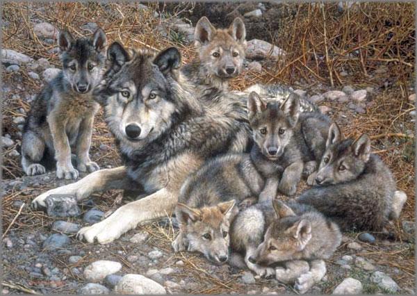 Carl Brenders - Den Mother - Wolf Family