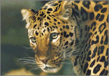 Carl Brenders - East of the Sun - Chinese Leopard