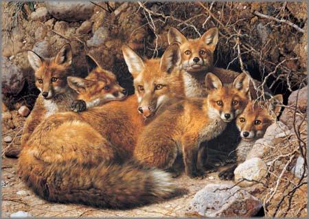 Carl Brenders - Full House - Fox Family