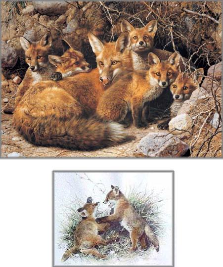 Carl Brenders - Full House - Fox Family - Premier Edition