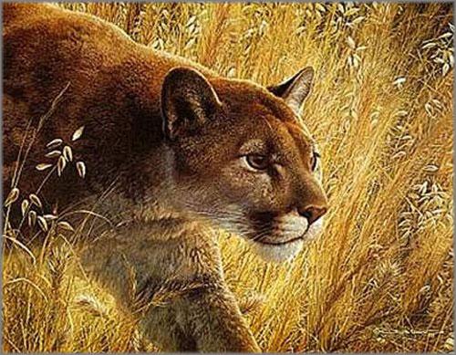 Carl Brenders - Predator's Walk