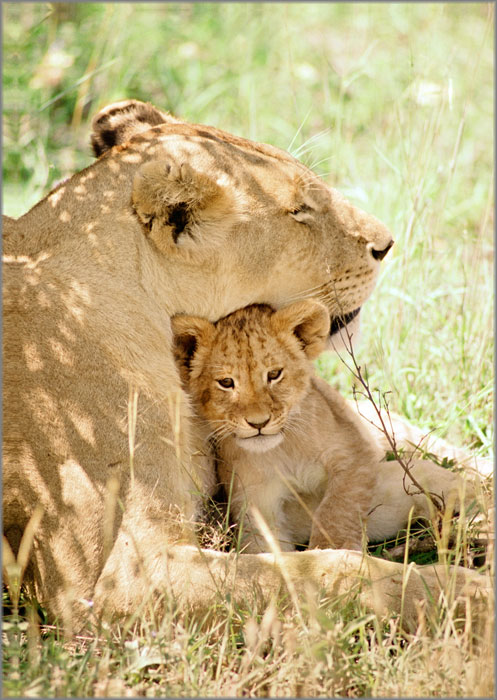 lioness and cub relationship counseling