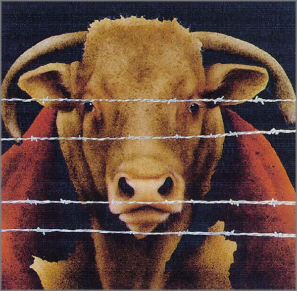 Will Bullas - Bunch of Bull