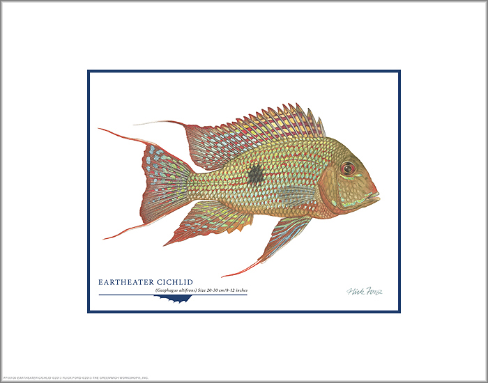 Flick Ford - Eartheater Cichlid: ART