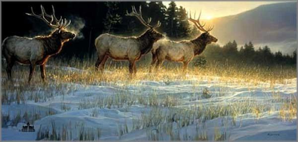 Nancy Glazier - Elk Ridge