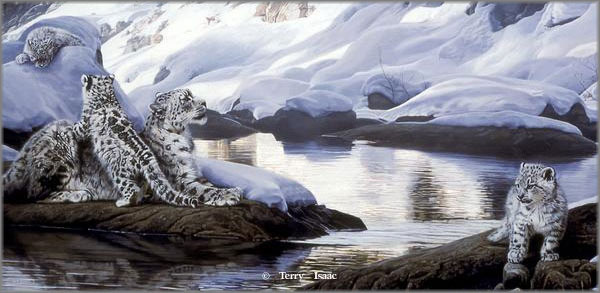 Terry Isaac - Watchful Eye - Snow Leopards