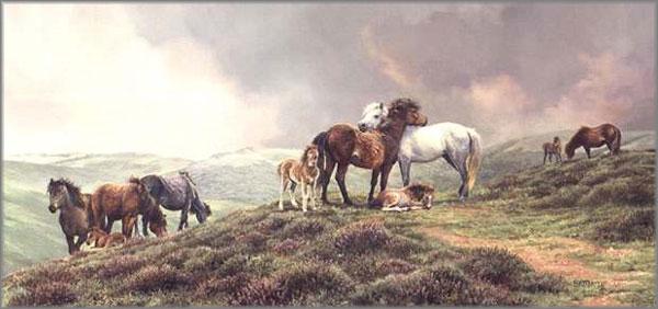 Bonnie Marris - Dartmoor Ponies