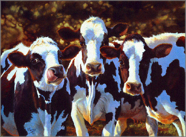 Bonnie Marris - Dairy Queens