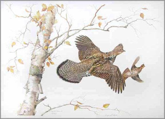 Maynard Reece - Birch - Ruffed Grouse