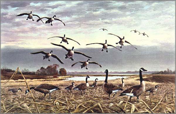 Maynard Reece - Canada Geese - Coming In