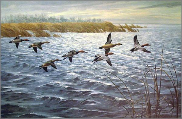 Maynard Reece - Canvasbacks