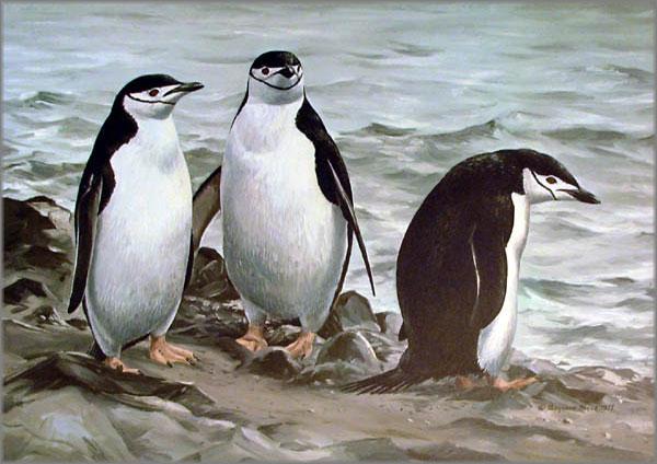 Maynard Reece - Chinstrap Penguins