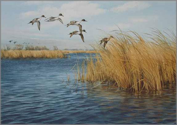 Maynard Reece - Courtship Flight