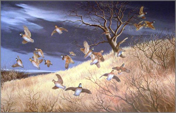 Maynard Reece - Dark Sky-Bobwhites
