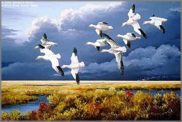 Maynard Reece - Dark Sky - Snow Geese