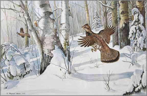 Maynard Reece - Heavy Snow Ruffed Grouse