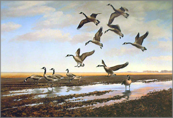 Maynard Reece - Landing-Canada Geese