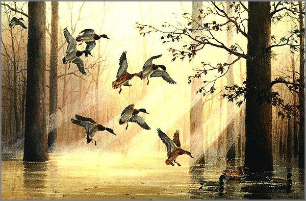 Maynard Reece - Morning Light - Mallards