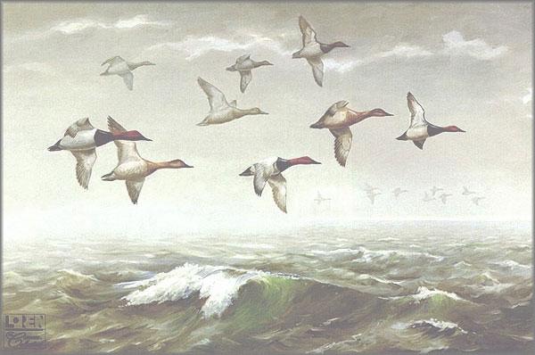Maynard Reece - Morning Fog - Canvasbacks