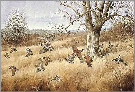 Maynard Reece - Old Tree - Bobwhites