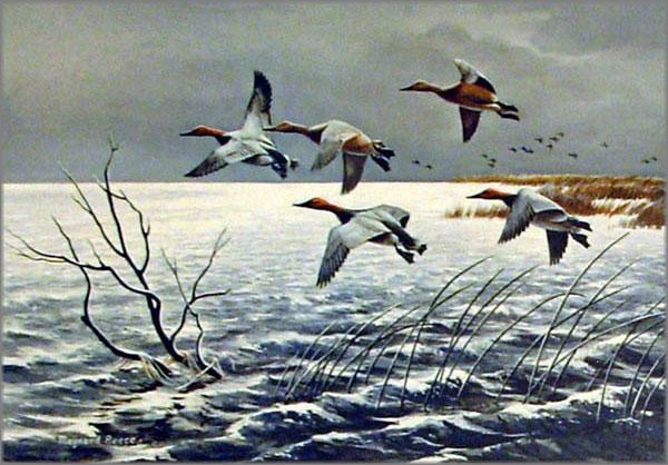 Maynard Reece - Passing Storm-Canvasbacks