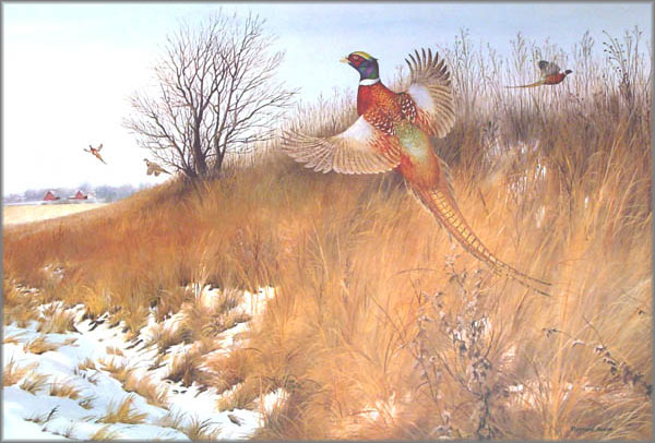 Maynard Reece - Pheasant Country