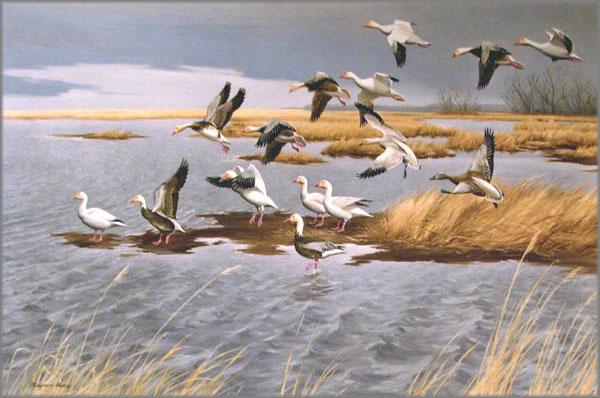 Maynard Reece - Snow Geese-Blue Geese