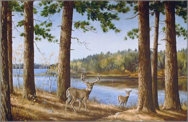 Maynard Reece - Solitude-Whitetail Deer
