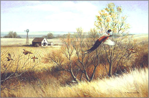 Maynard Reece - Weedy Draw-Ring-Necked Pheasants
