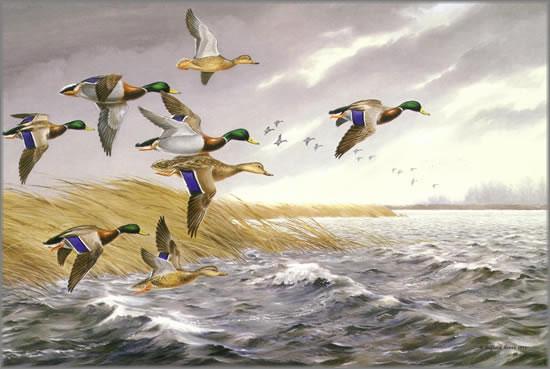 Maynard Reece - Windy Day Mallards