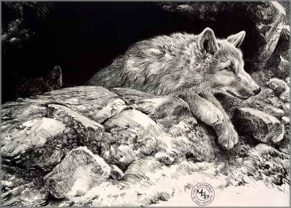 John Seerey-Lester - Arctic Wolf Pups