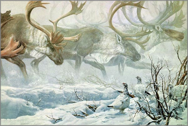 John Seerey-Lester - Arctic Procession - Willow Ptarmigan With Caribou