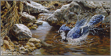 John Seerey-Lester - Bathing - Blue Jay
