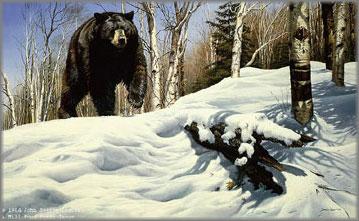 John Seerey-Lester - Breaking Cover - Black Bear