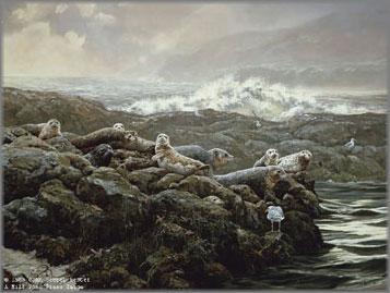 John Seerey-Lester - Coastal Clique-Harbor Seals